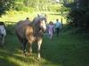 Urlaub auf dem Bauernhof bei den Tieren auf der Weide - Urlaub, Schwansen