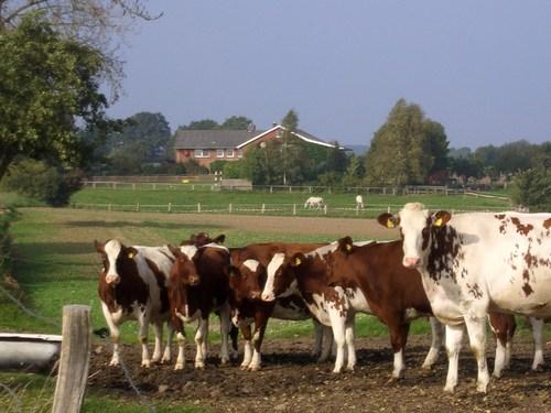 Foto von Bio-Bauernhof/Kieler Bucht