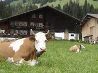 Bio-Bauernhof