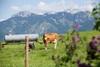 Blick auf die Allgäuer- und Tiroler Berge - Bio-Bauernhof, Rieden am Forggensee