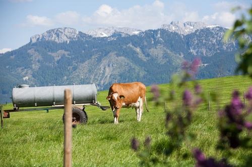Bio-Bauernhof in Rieden am Forggensee