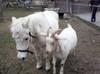 Ziege und Pony - Ferienwohnung, Altmühltal, Naturpark