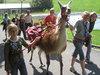 Ausflug mit Lama im Sommer - Ferienhaus, Sachsen-Anhalt