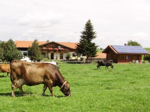 Foto von Bio-Ferienhaus/Ostallgäu