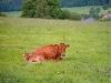 Urlaub auf dem Bauernhof in Diemelsee - Ferienwohnung , Hessen