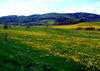 Rollstuhlgeeignete Ferienwohnung auf dem Bauernhof im Waldecker Land  - Urlaub , Diemelsee