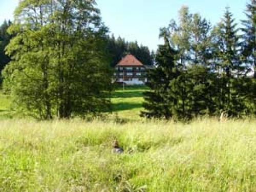 Foto von Bauernhof/Kinzig-Gutachtal