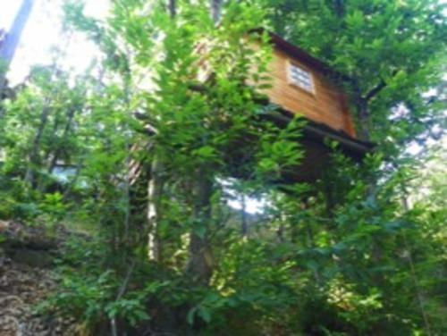 Verna mit Baumhaus