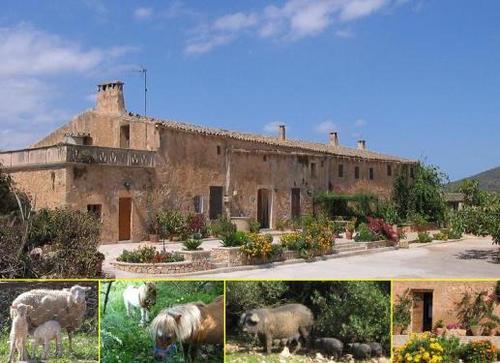 Foto von Bio-Bauernhof/Mallorca und Umgebung