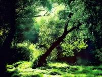 Wälder an der Donau